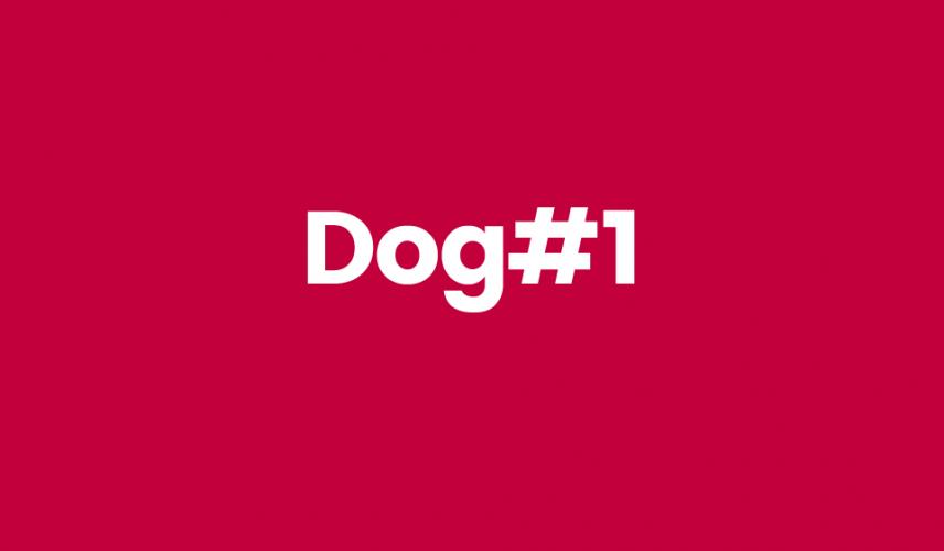Dog1 nombre escogido para marca comida para perros