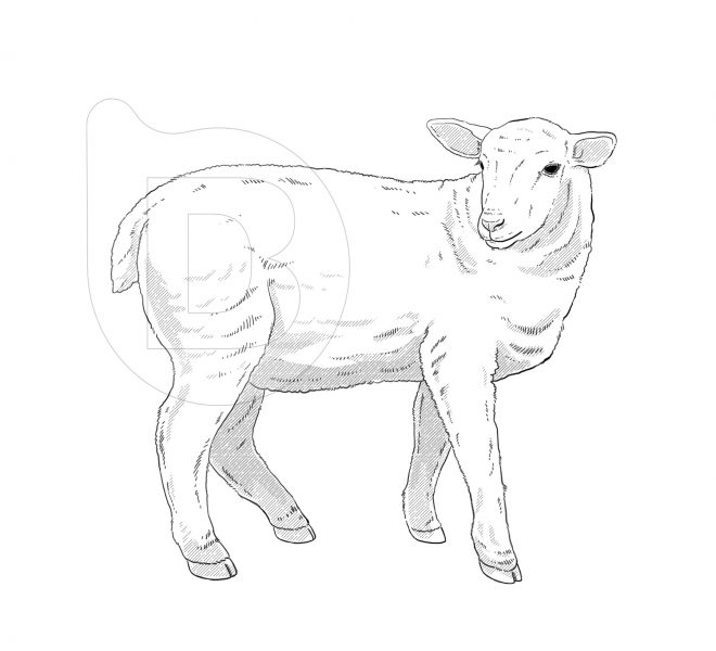 ilustraciones-grabados-vectoriales-brandesign-001
