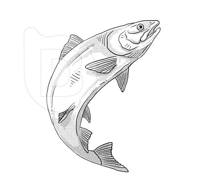 ilustraciones-grabados-vectoriales-brandesign-003