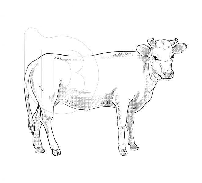 ilustraciones-grabados-vectoriales-brandesign-004