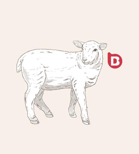 Ilustraciones para diseño de packaging