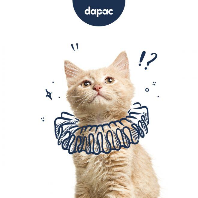 branded content pet food Brandesign agencia creativa produccion de contenidos de marca